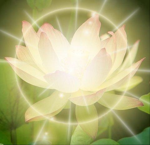 Healing lotus flower