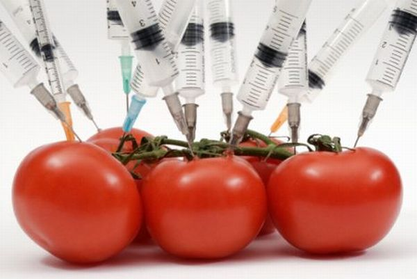 effects of GMO - Tomato - The Labyrinth of LIfe - Stefanos SIfandos