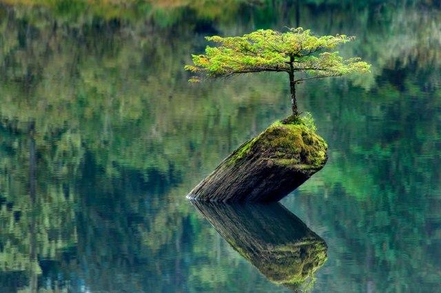 Stillness. The Labyrinth of Life