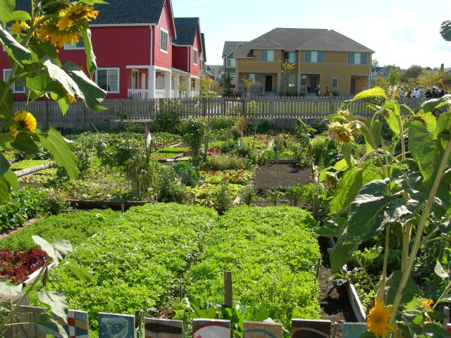 Community gardens - The Labyrinth of Life